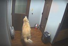 hastaneden kaçan köpek