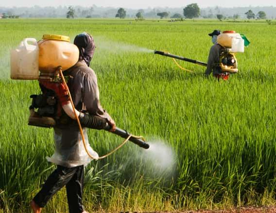 Pestisit Nedir