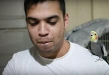 beatbox yapan papağan