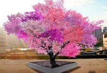 Bu Ağaçta 40 Farklı Meyve Yetişiyor