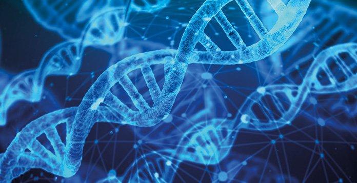 Çevre Faktörleri IQ Düzeyinizi Genetik Olarak Değiştirebilir