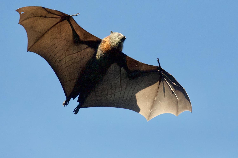 Koronavirüsü Söylendiği Gibi Hayvanlardan Bulaştıysa Çok Daha Tehlikeli Olabilir!