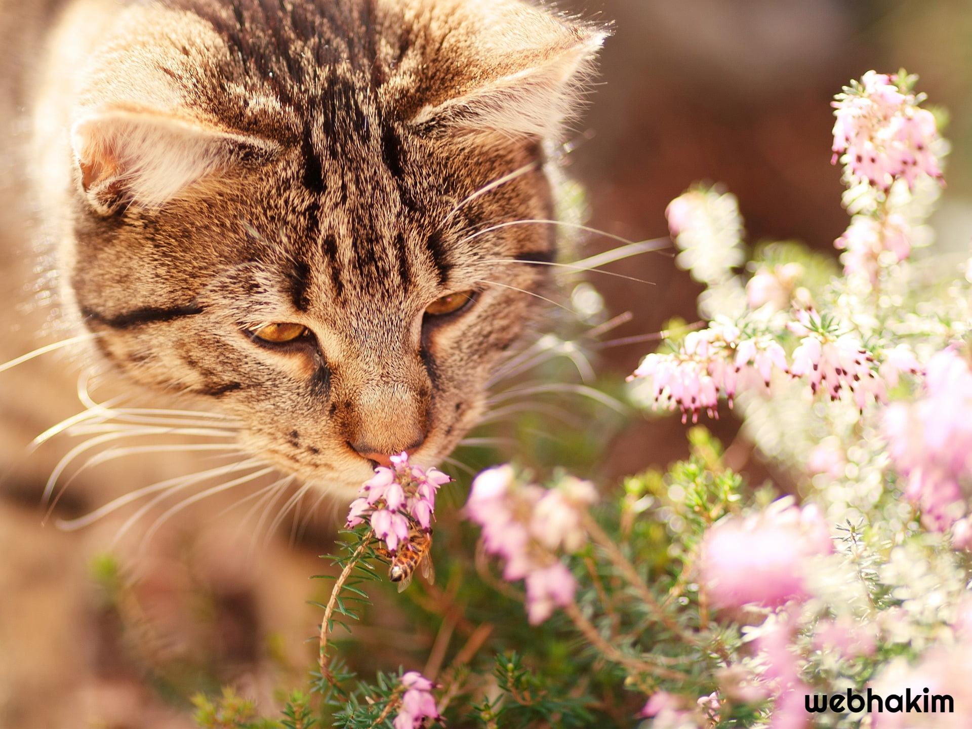 kediler davranislari