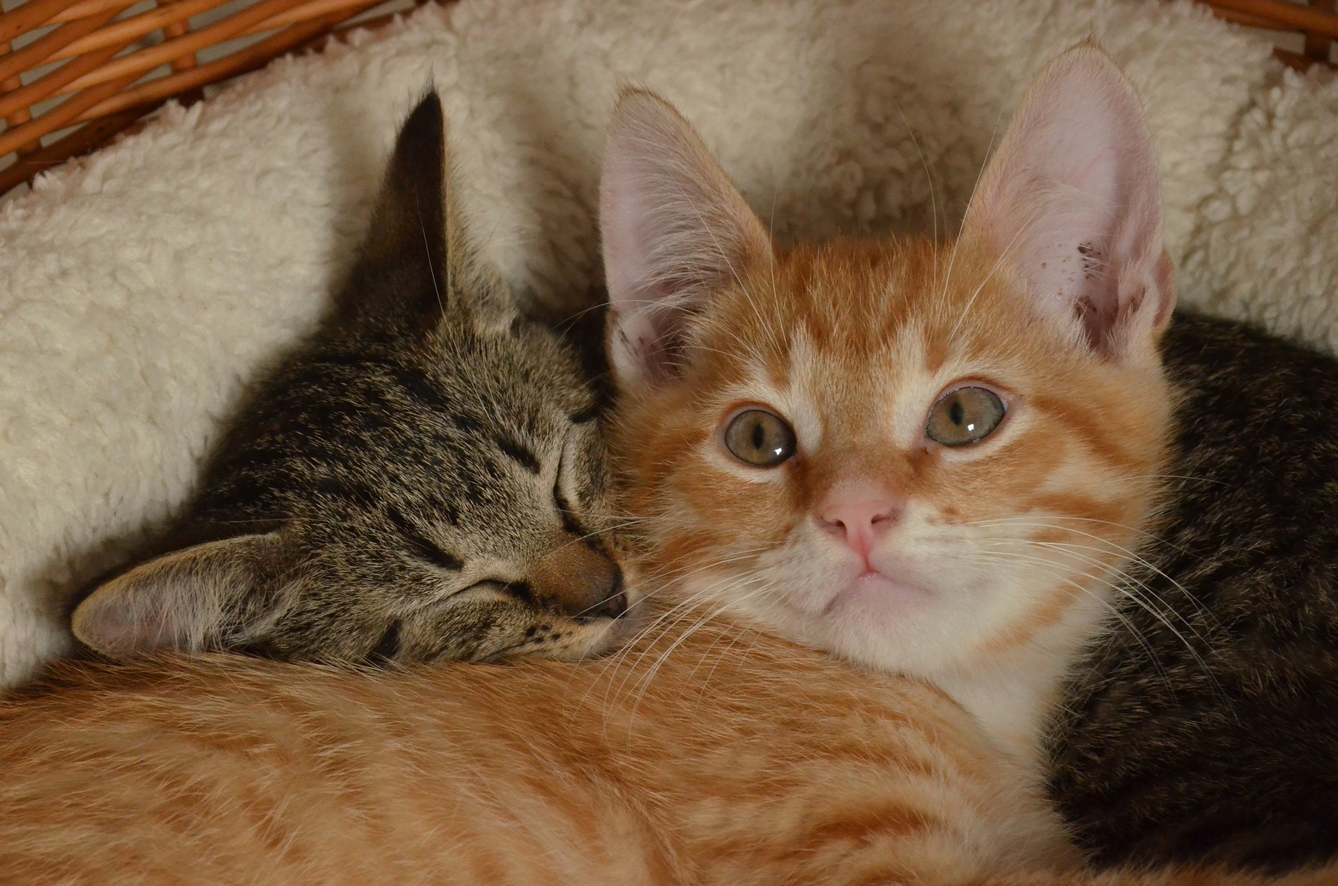 kedi davranislari ve anlamlari