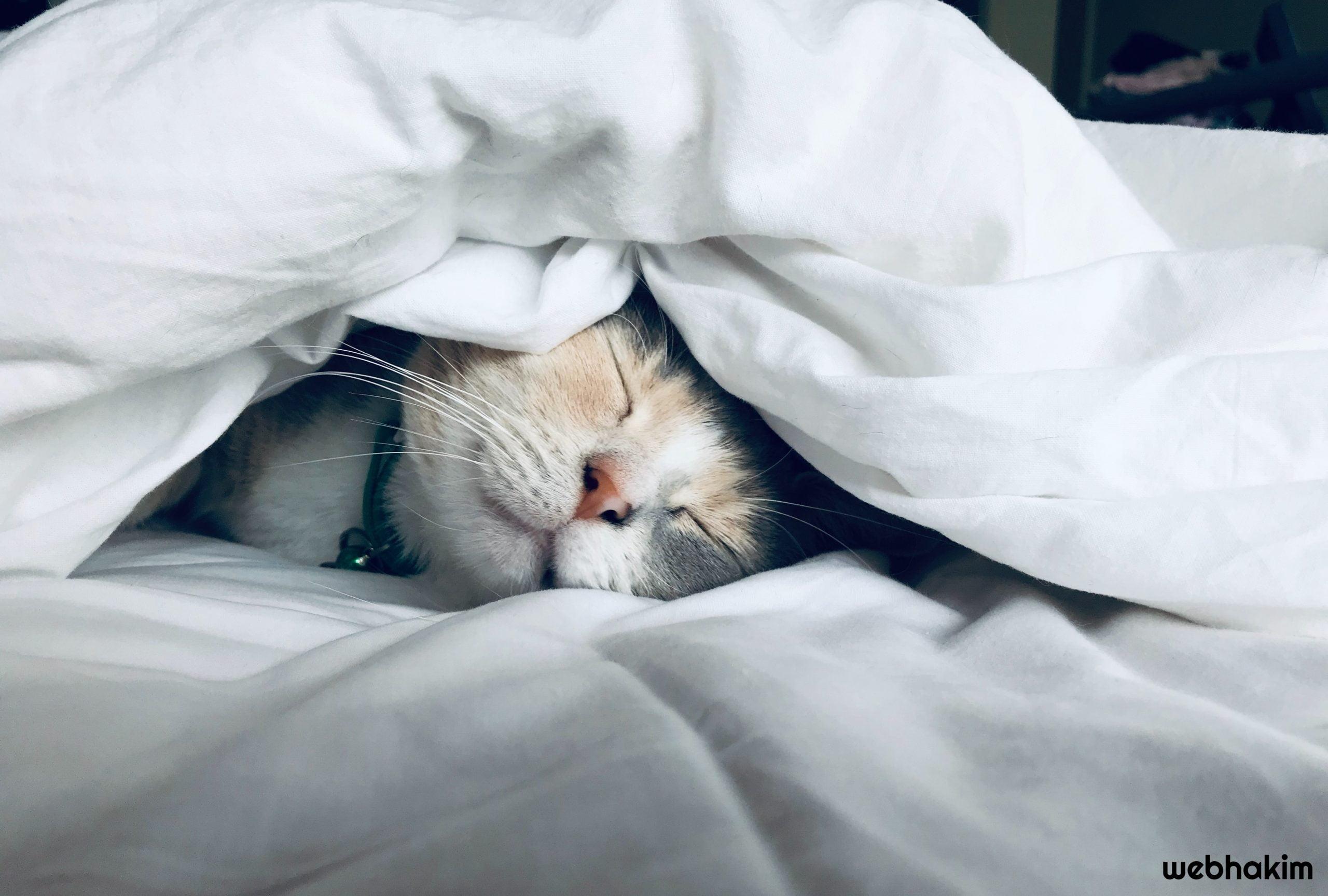 kedi davranislari webhakim