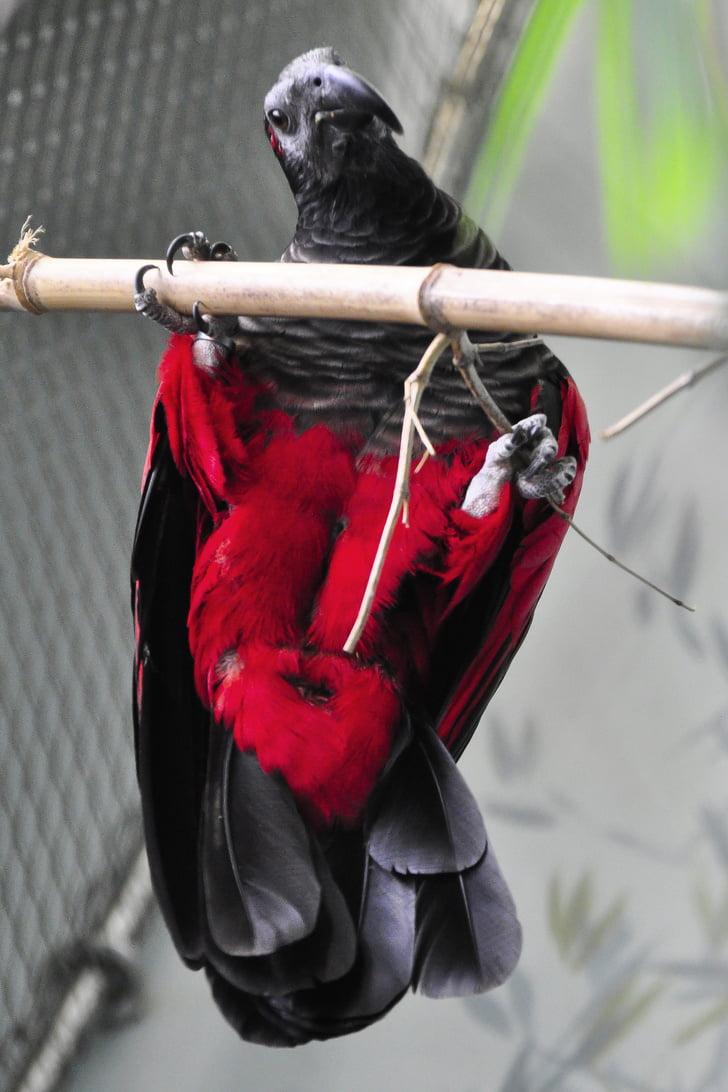 nesli papagan