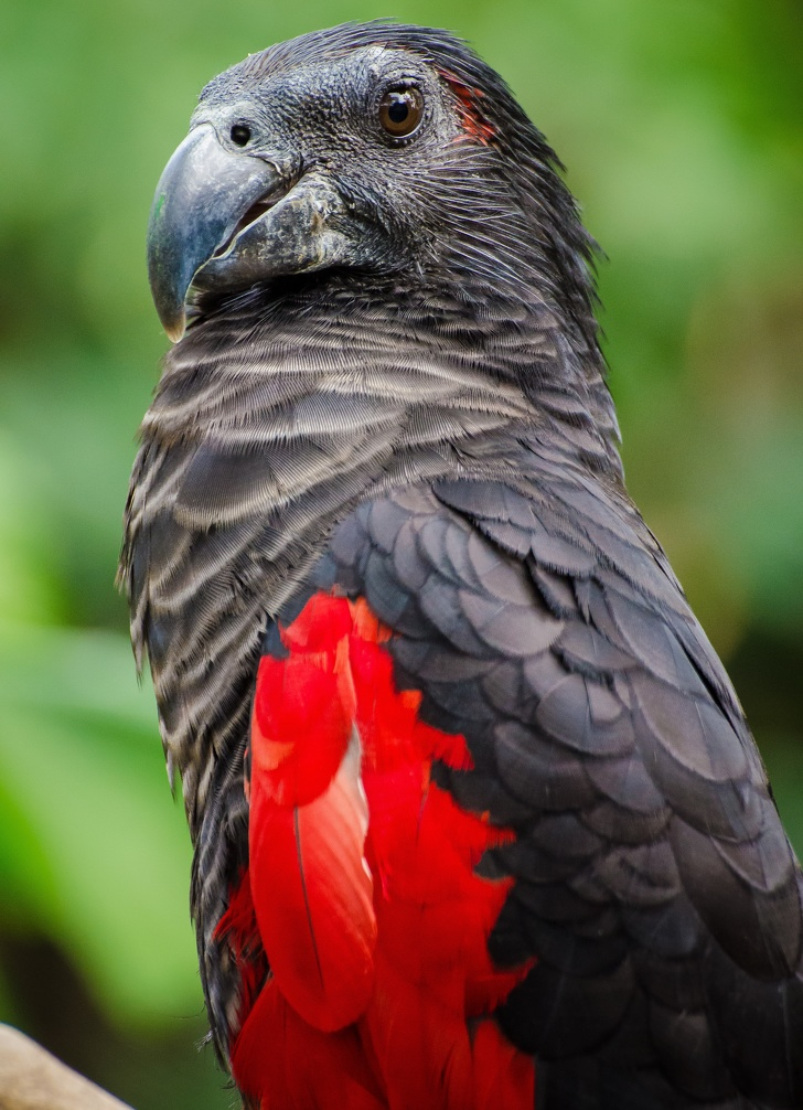 nesli tukenen papagan