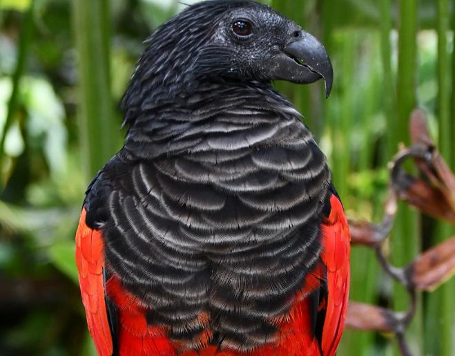 renkli papagan