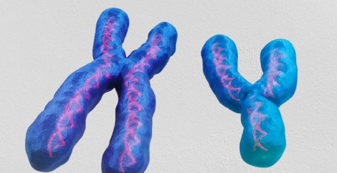 Erkeklerde Y Kromozomu
