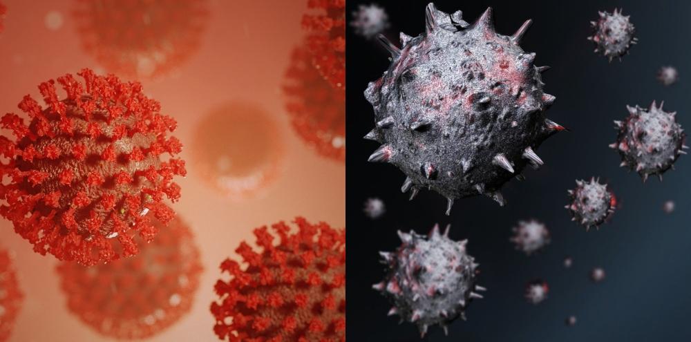 Koronavirüse Benzeyen Yeni Bir Virüs Keşfedildi